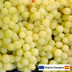 raisin blanc avelo de table origine espagne europe fruit Dojat Primeurs ain amberieu jeannette